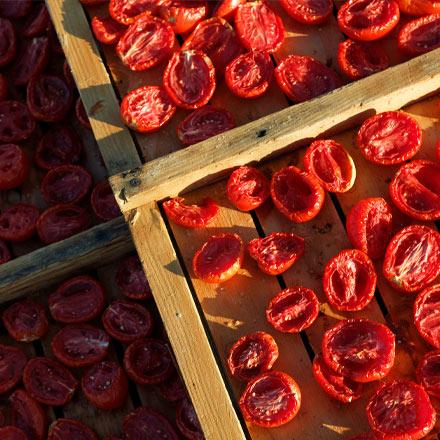 Sun Dried Tomatoes drying under California sun