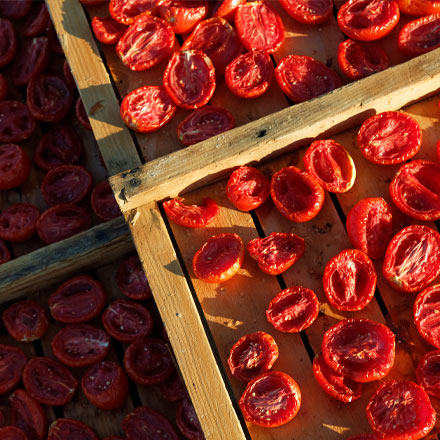 California Sun Dried Tomatoes drying under California sun