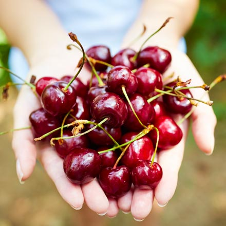 holding pile of dried cherries in hands during harvest