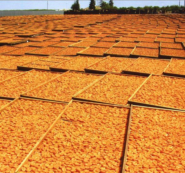 California Sun Dried Apricots