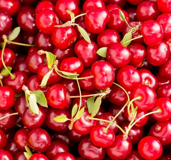 Dried Tart Sweetened Cherries