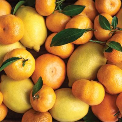 traina_foods_dried_citus_orange_lemon_tangerine